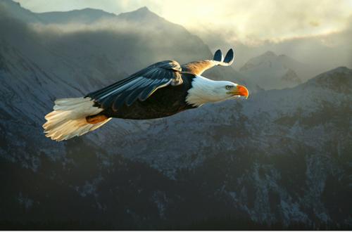 eagle-9039206